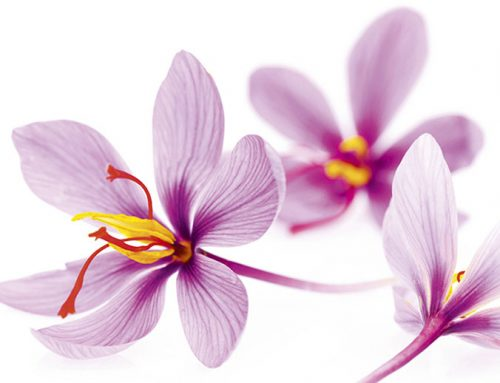 7 Health Benefits of Saffron: The Priceless Spice