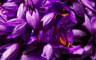 What Is Saffron Tea Good for